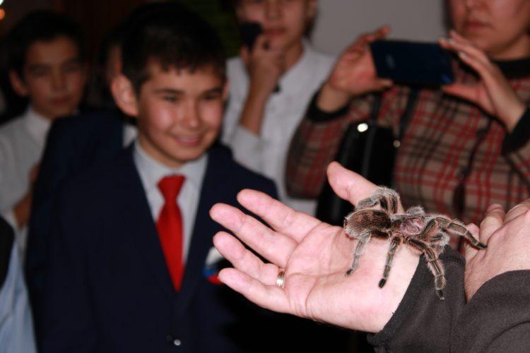 Страшно красивые... пауки